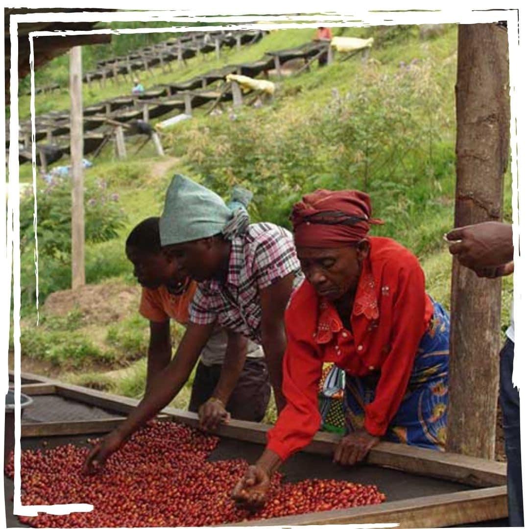 kaffeeplantage kaffeegenuss innsbruck barista sca 1