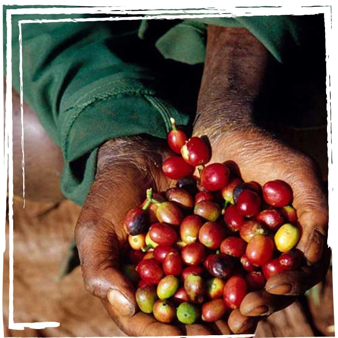 kaffeeplantage kaffeegenuss innsbruck barista sca 3